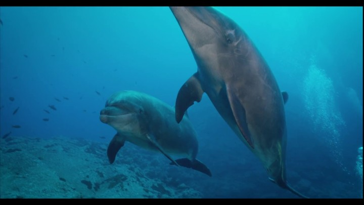 Nate and Sean | MONSTRO 8K Underwater in Socorro Islands | Sean Ruggeri | Shot on RED